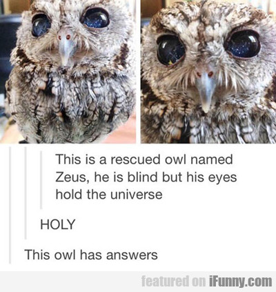 This Is A Rescued Owl...