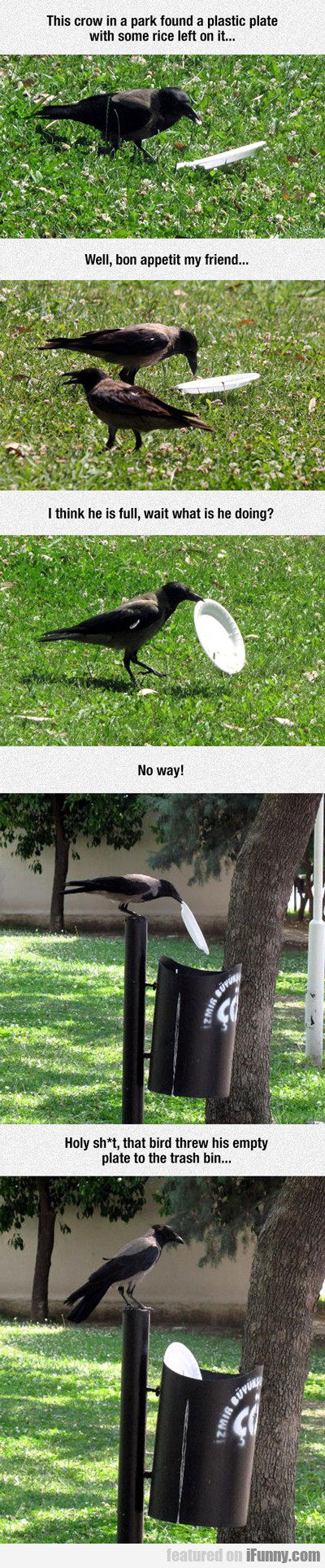 This Crow In A Park...