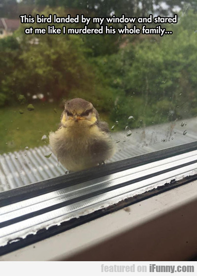 This Bird Landed By My Window...