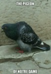The Pigeon Of Notre Dame...