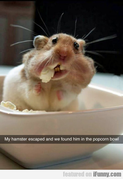 My Hamster Escaped...
