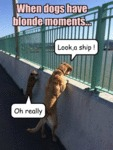 When Dogs Have Blonde Moments