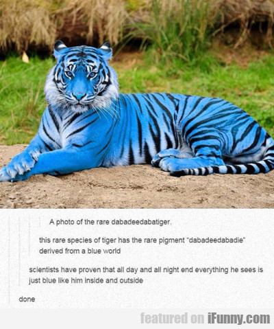A Photo Of The Rare Dabadeedabatiger