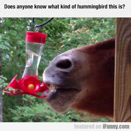 Does Anyone Know What Kind Of Hummingbird