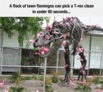 A Flock Of Lawn Flamingos...