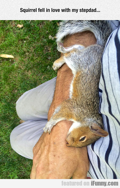 squirrel fell in love with my stepdad...