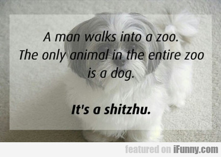 A Man Walks Into A Zoo...