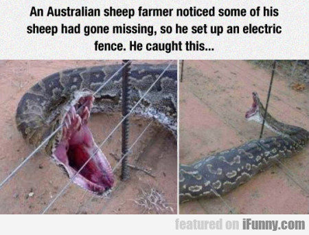 An Australian Sheep Farmer