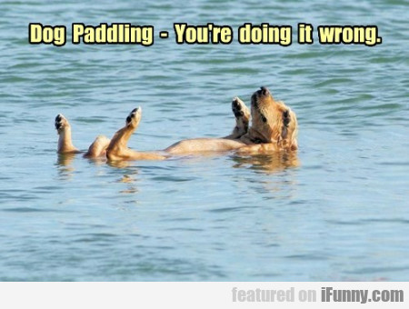 Dog Paddlinbg You Re Doing It Wrong