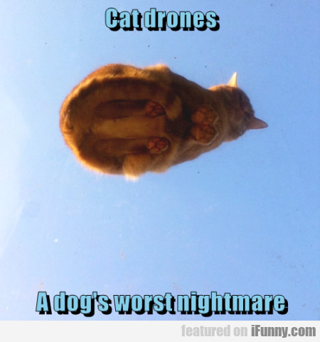 Cat Drones A Dogs Worst Nightmare
