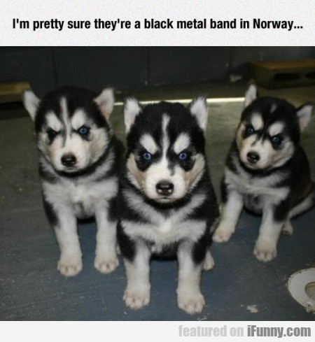 I M Pretty Sure The Are A Black Metal