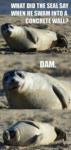 What Did The Seal Say When