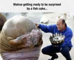 Walrus Getting Ready...