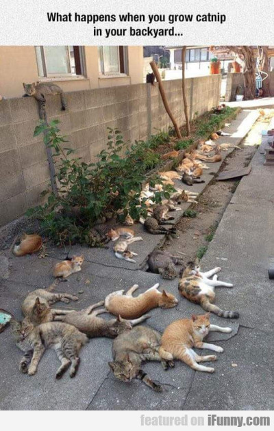 What Happens When You Grow Catnip