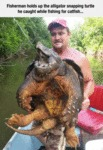 Fisherman Holds Up The Alligator Snapping