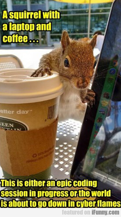 A Squirrel With A Laptop
