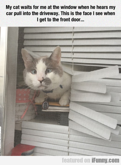 my cat waits for me at the window when he hears.
