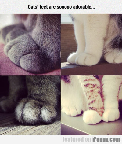 Cats Feet Are Soooo Adorable