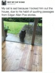 My Cat Is Sad Because I Locked Him Out Of The Hous
