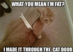 What Do You Mean I M Fat