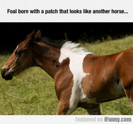 foal born with a patch
