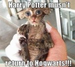Harry Potter Musnt Return To Hogwarts