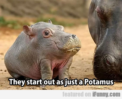 They Start Out As Just Potamus...
