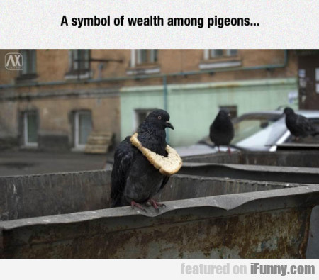 A Symbol Of Wealth Among Pigeons