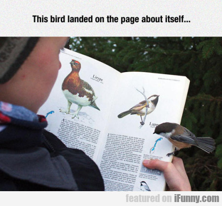 this bird landed on the page