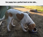 Our Puppy Has A Perfect Heart On Her Side...