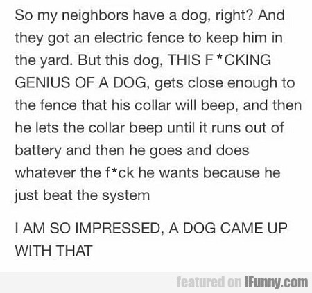 So My Neighbors Have A Dog