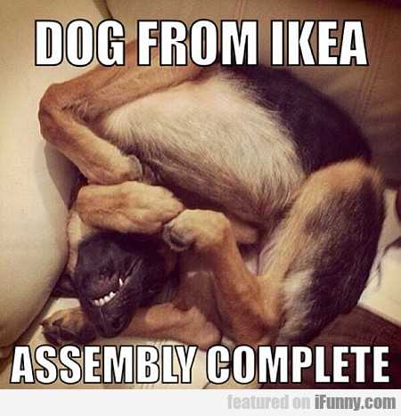 Dog From Ikea