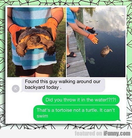 That's A Tortoise, Not A Turtle