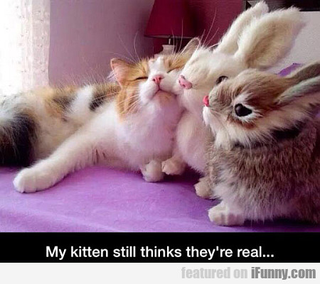 my kitten still thinks they're real