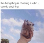 This Hedgehog Is Cheering For You...