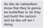 So Like Do Caterpillars Know...