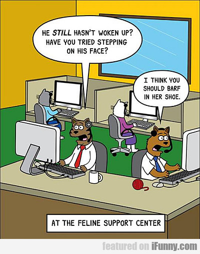 at the feline support center