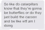 So Like Do Caterpillars