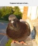 If Pigeons Had Eyes In Front...