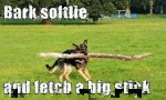 Bark Softlie And Fetch A Big Stick