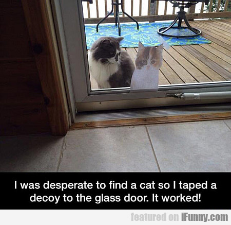 I Was Desperate To Find A Cat...