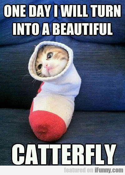 one day i will turn into a beautiful catterfly...