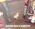 Random Duck In Gamestop