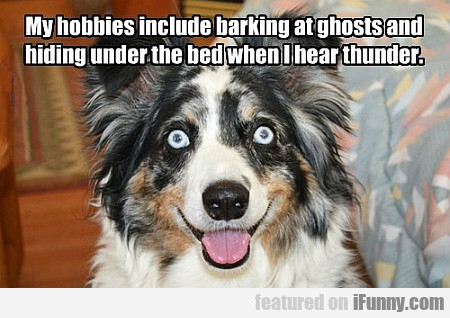 My Hobbies Include Barking At Ghosts And Hiding