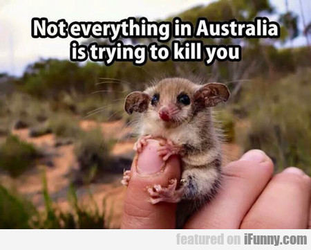 Not Everything In Australia Is Trying To Kill You.