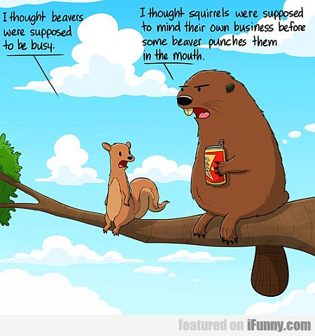 i thought beavers were supposed to be busy