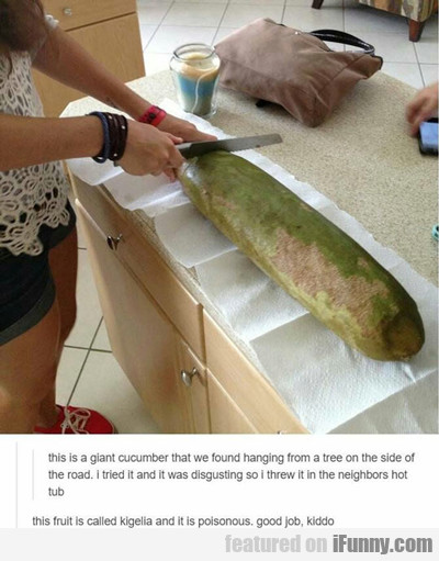 This Is A Giant Cucumber...