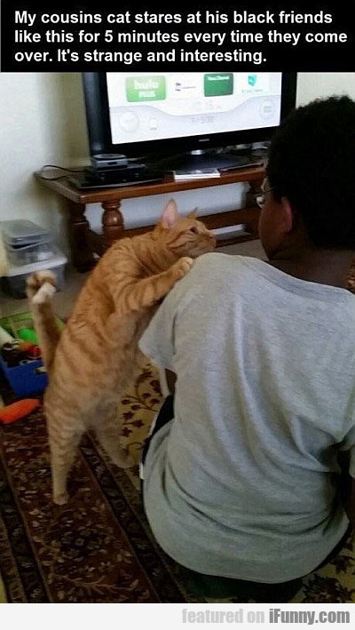 My Cousin's Cat Stares At His Black Friends