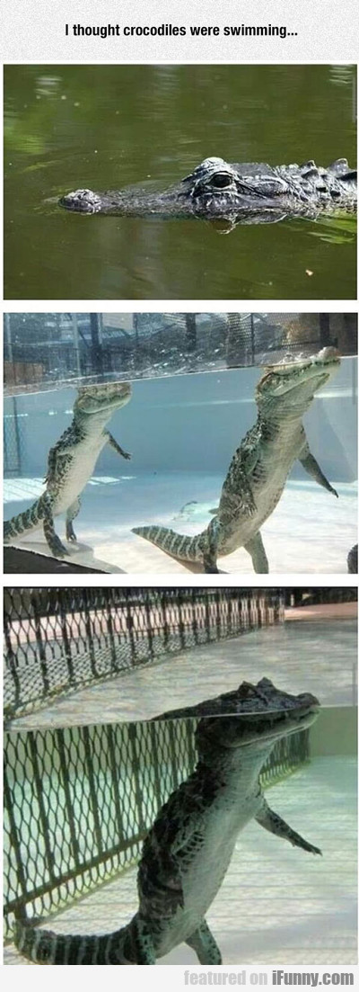 I Thought Crocodiles Were Swimming...