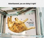 Advertisement, You Are Doing It Right...